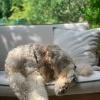 Halle Berry's Dog