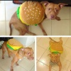 Pitburger